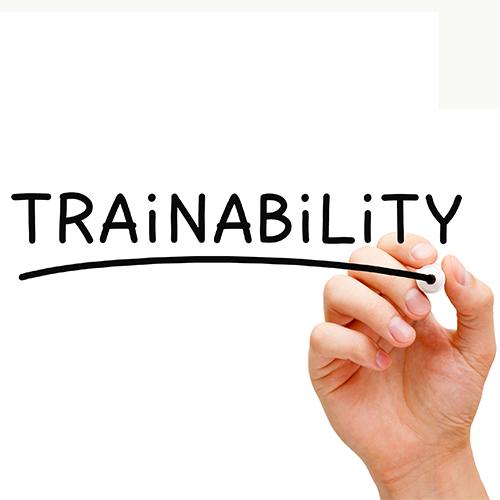trainability-black-marker-93536458.jpg